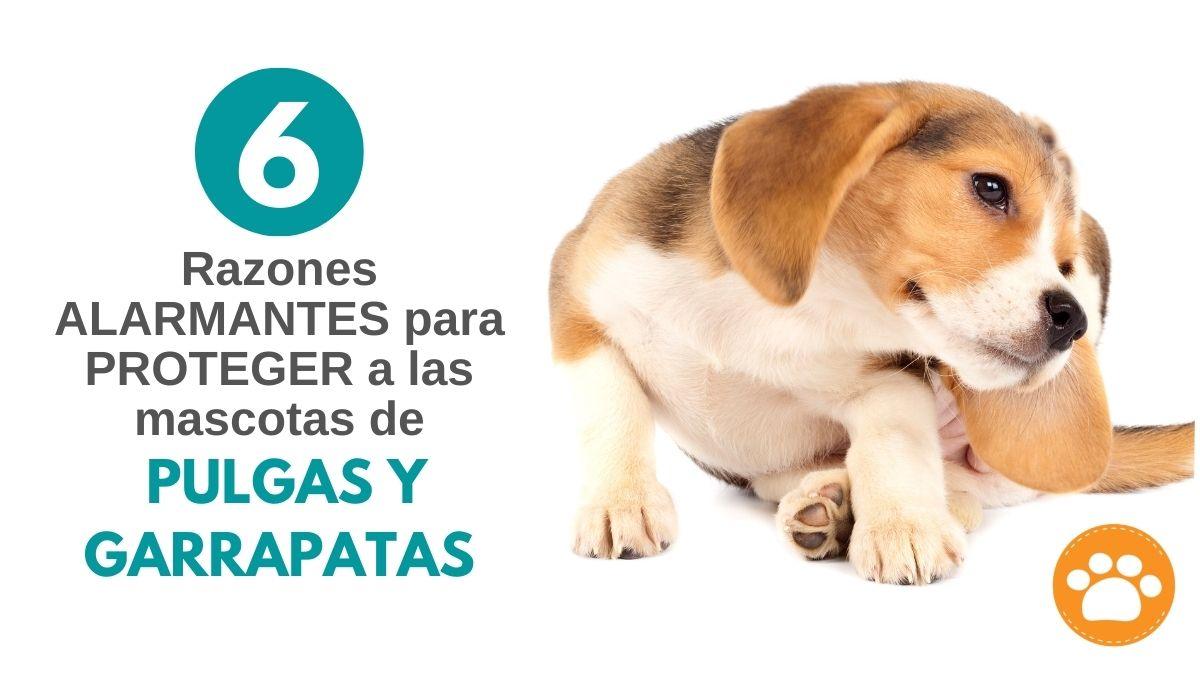 6 Razones alarmantes para proteger a las mascotas de PULGAS Y GARRAPATAS