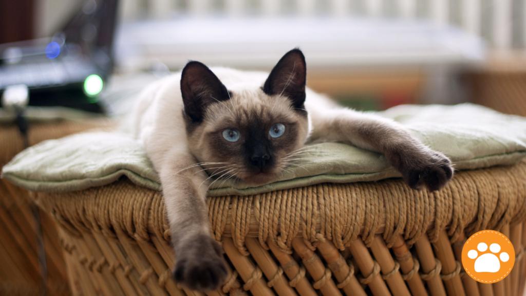 Con la llegada de la temporada de lluvia, algunas enfermedades virales pueden afectar, no solo a las personas, sino también a nuestras mascotas.