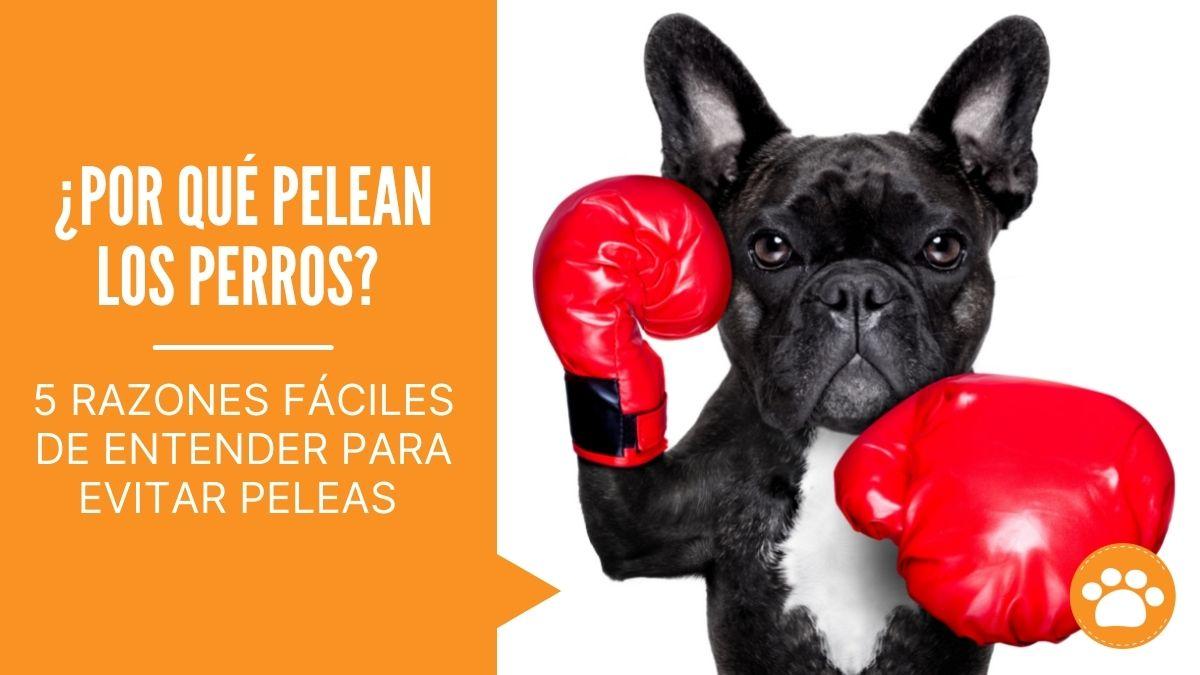 ¿Por qué pelean los perros?