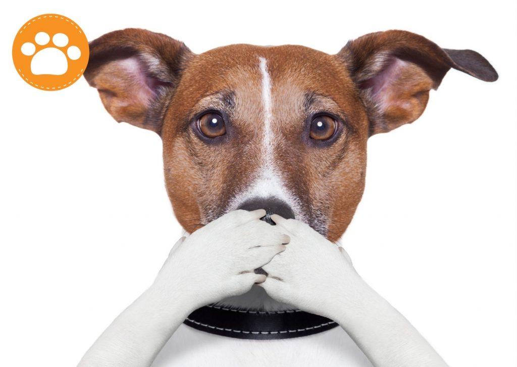 dientes amarillos en perros