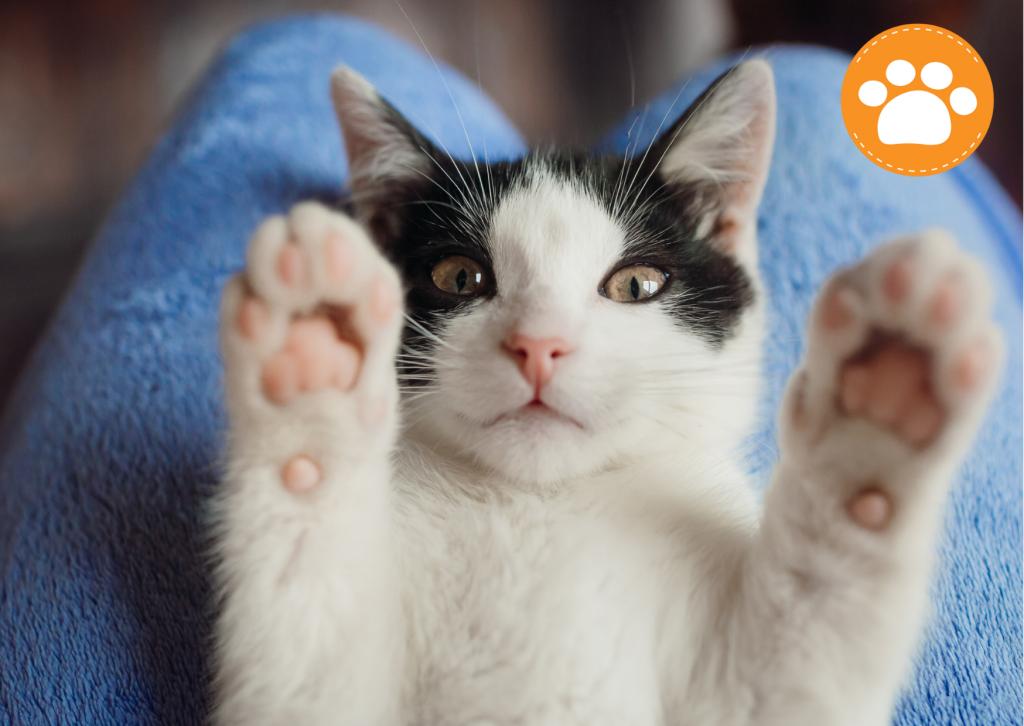 Cuidados dentales que todo gato debe tener -y casi ninguno lo tiene- Esta área del gato no siempre es la mejor cuidada, ya sea porque no es fácil de tratar (es muy difícil que un gato que se deje abrir la boca tranquilamente) o porque asumimos que no hay necesidad de cuidarlos.