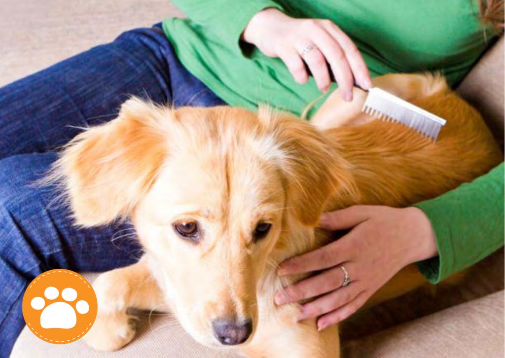 Alergia y las mascotas, que lo provoca? a continuación te lo contamos