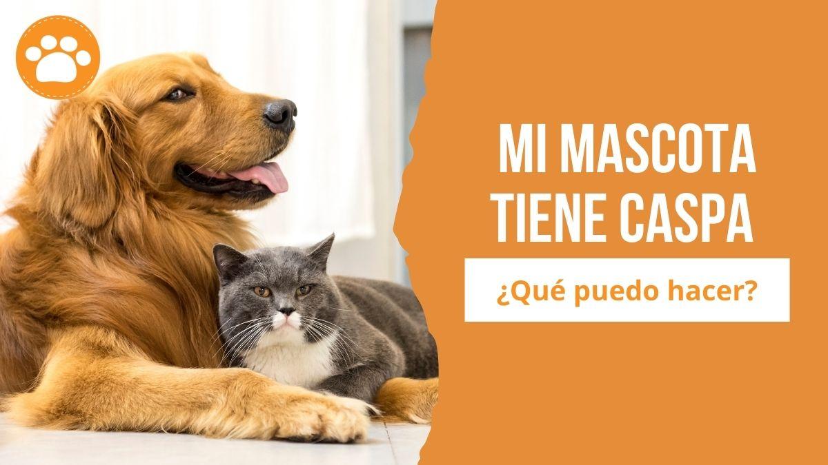 caspa en perros y gatos