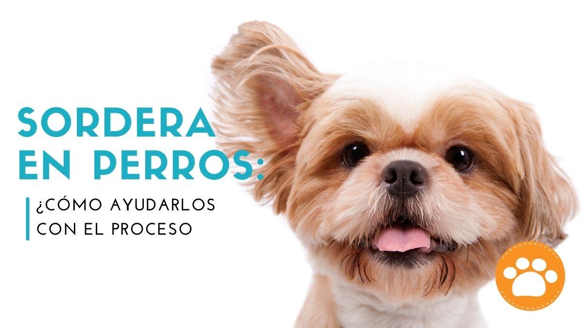 Sordera en perros: ¿Cómo ayudarlos con el proceso?
