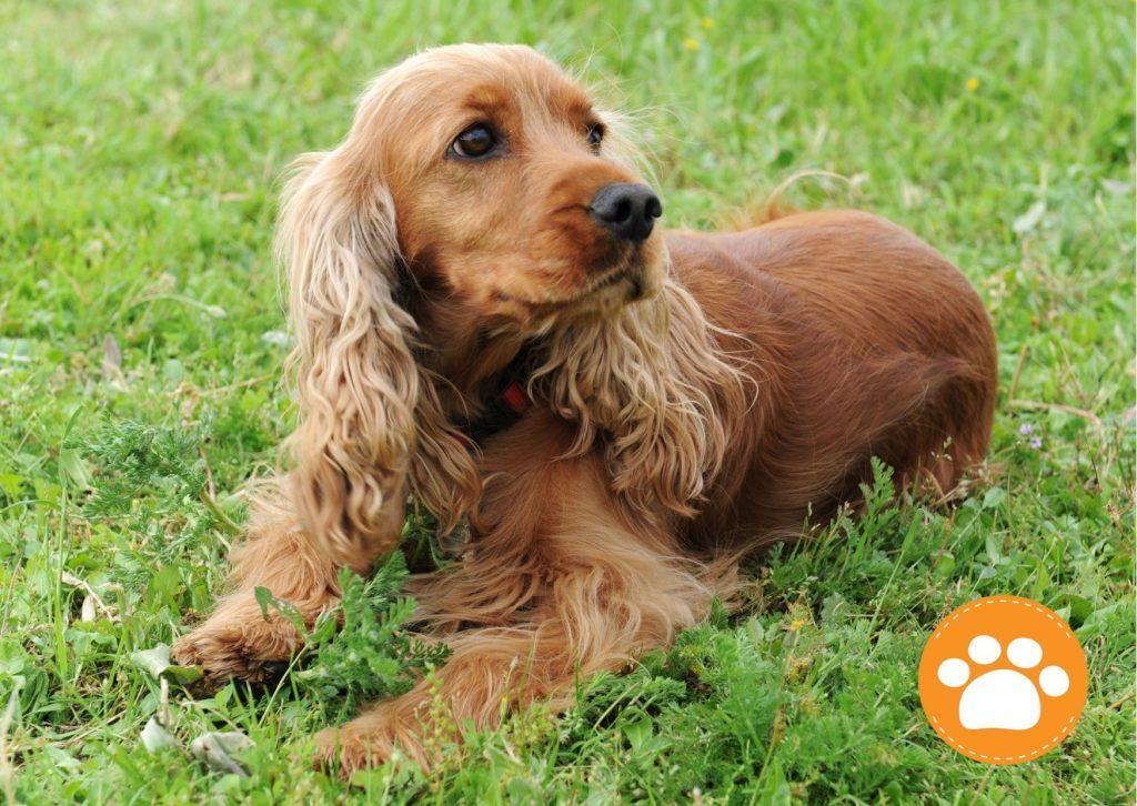 La vacunación es clave en la prevención de enfermedades en mascotas, como la rabia, Moquillo entre otros.