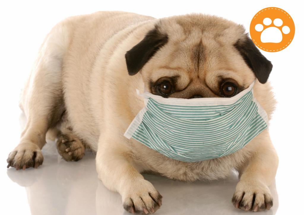 medicamentos para humanos es tóxico para tu mascota