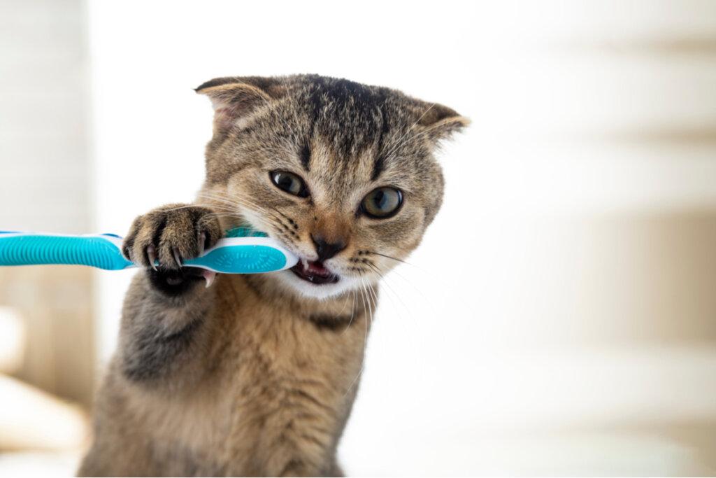 El cuidado dental en gatos es un tema poco tratado, pero de vital importancia para nuestros felinos.