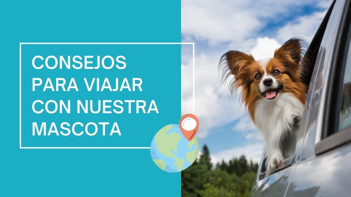 Consejos para viajar con nuestra mascota